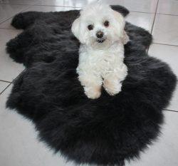 Lammfell Schaffelle für Hunde