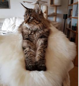 Lammfell für Hund und Katze Schaffell